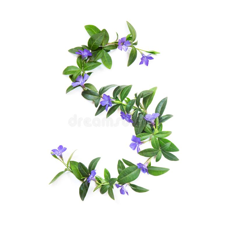 D, letter of the alphabet of flowers isolated on white background. The letter of flowers and leaves of periwinkle royalty free stock photo