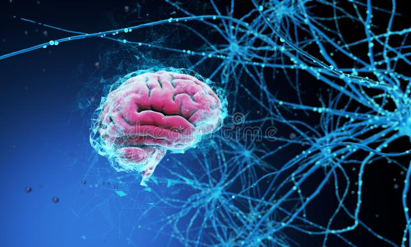 3d mózg istota ludzka royalty ilustracja
