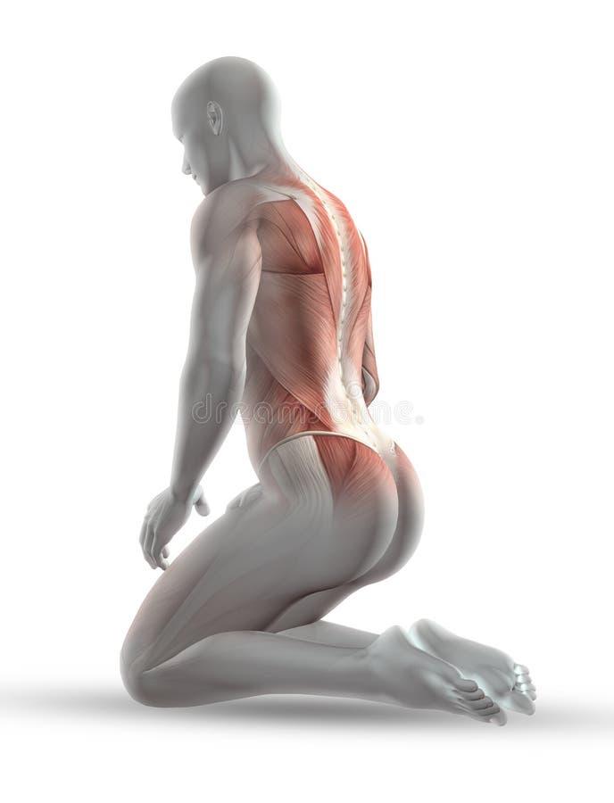 3D męska medyczna postać z mięsień mapą w klęczenie pozyci ilustracja wektor