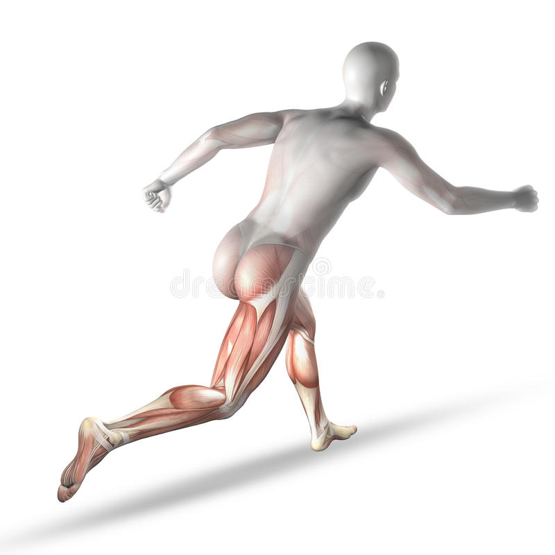 3D male medical figure running with partial muscle map royalty free illustration