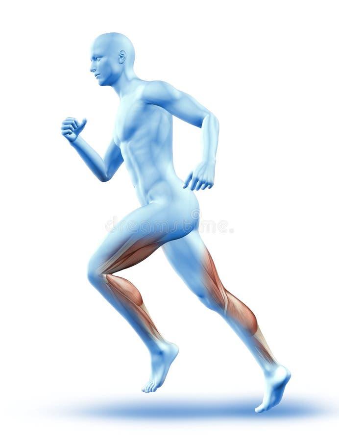 3D mannelijk cijfer die met spieren lopen vector illustratie