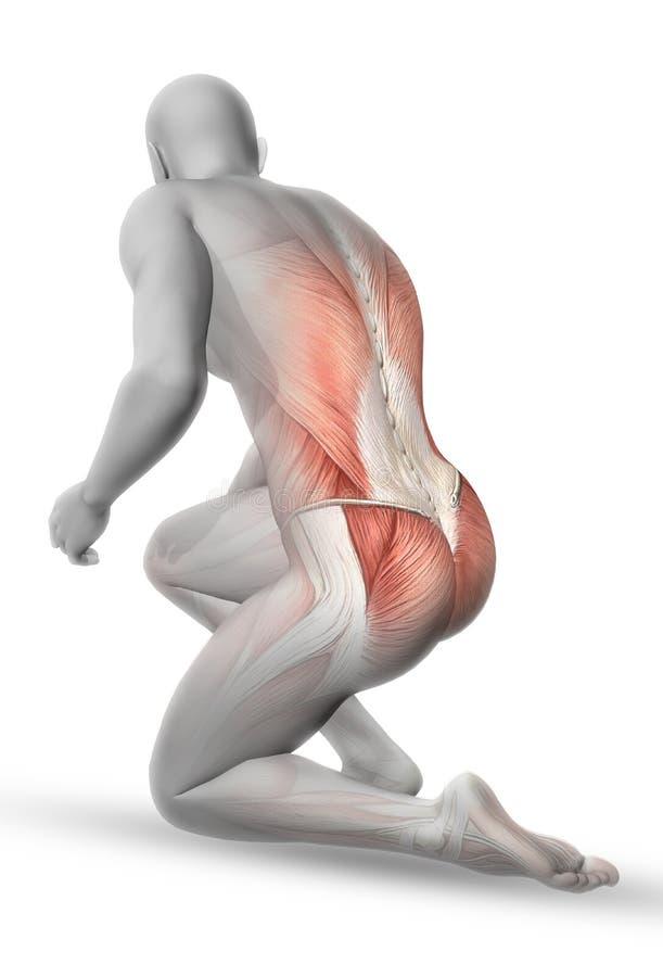 3D mannelijk medisch cijfer in het knielen positie royalty-vrije illustratie