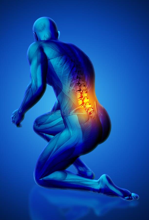 3D mannelijk medisch cijfer met lagere die stekel in het knielen wordt benadrukt royalty-vrije illustratie