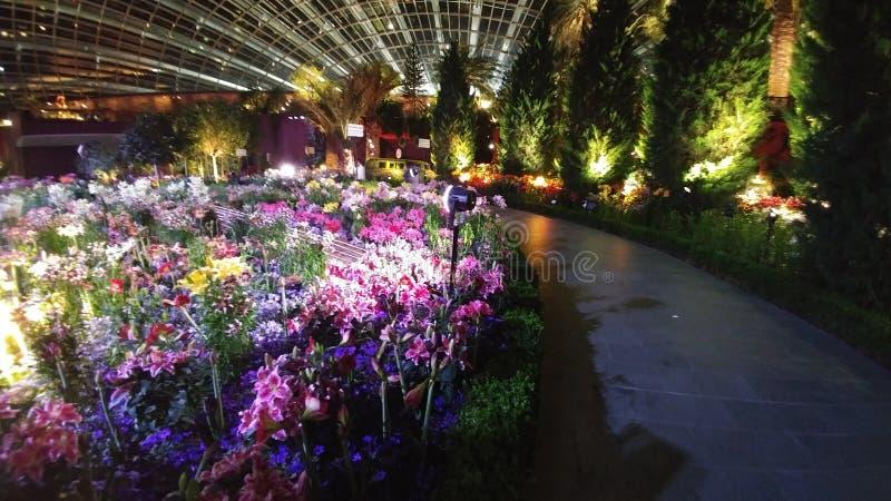 Dôme Singapour de fleur par nuit photographie stock libre de droits