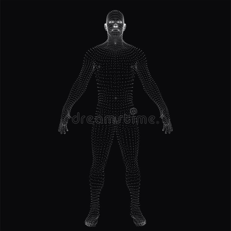 3D menselijk lichaam Gestippeld wireframe stock afbeeldingen
