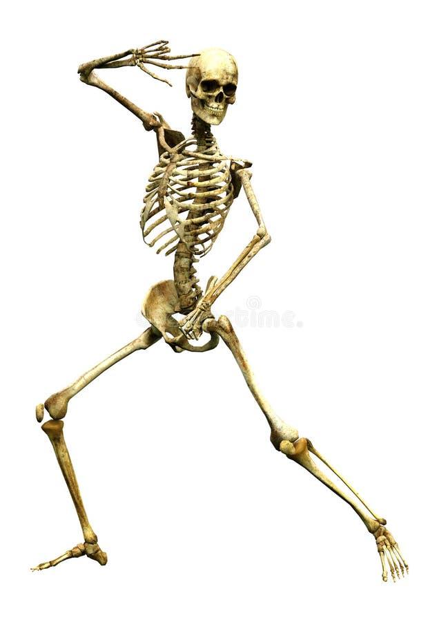 3D Menselijk Skelet op Wit teruggeven stock afbeelding