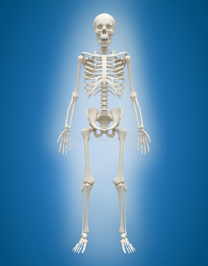3D Menselijk skeletmannetje op blauwe achtergrond stock illustratie