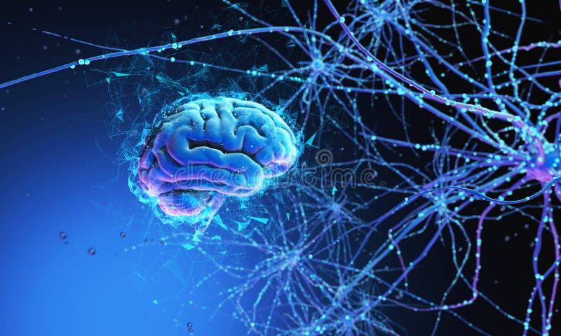 3D Menselijke Hersenen royalty-vrije stock foto's