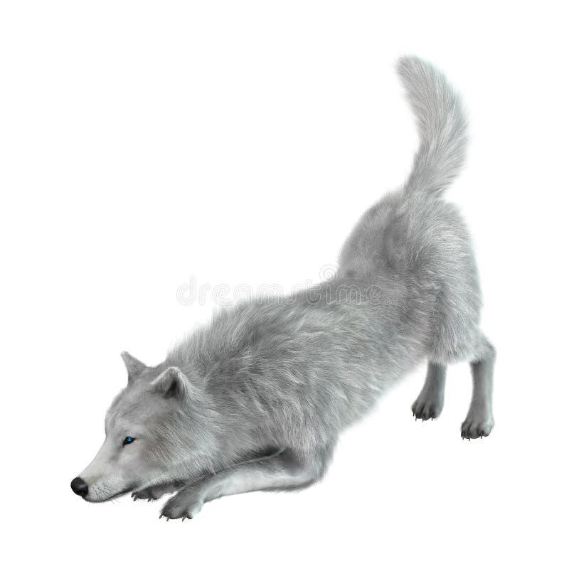 3D Odpłaca się Arktycznego wilka na bielu zdjęcia stock