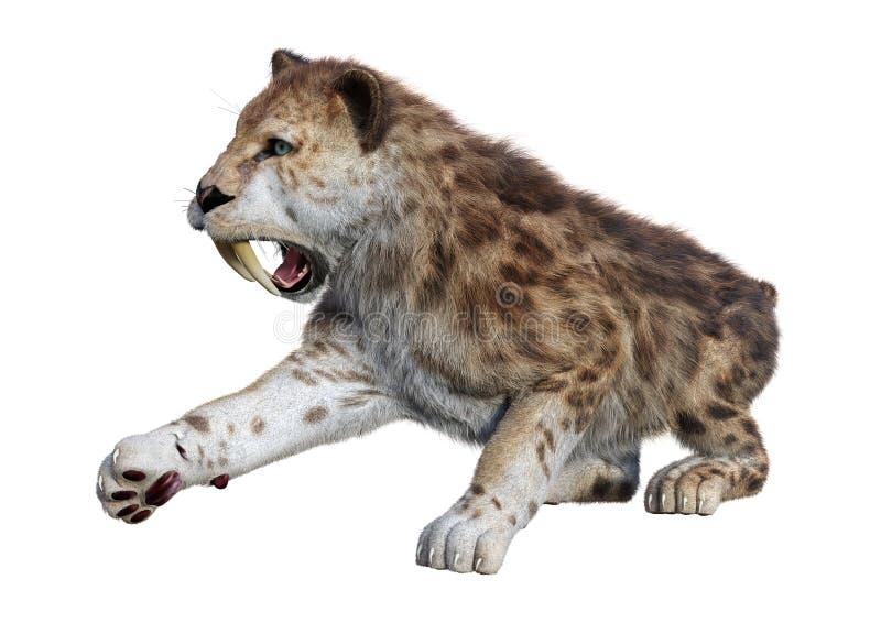 3D Odpłaca się Sabertooth tygrysa na bielu ilustracji