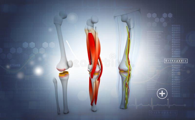 3d odpłacają się ludzka noga ilustracji