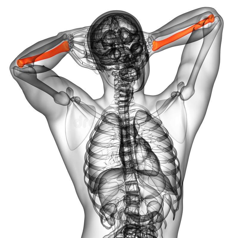 3d odpłacają się medyczną ilustrację promieniomierz kość ilustracji