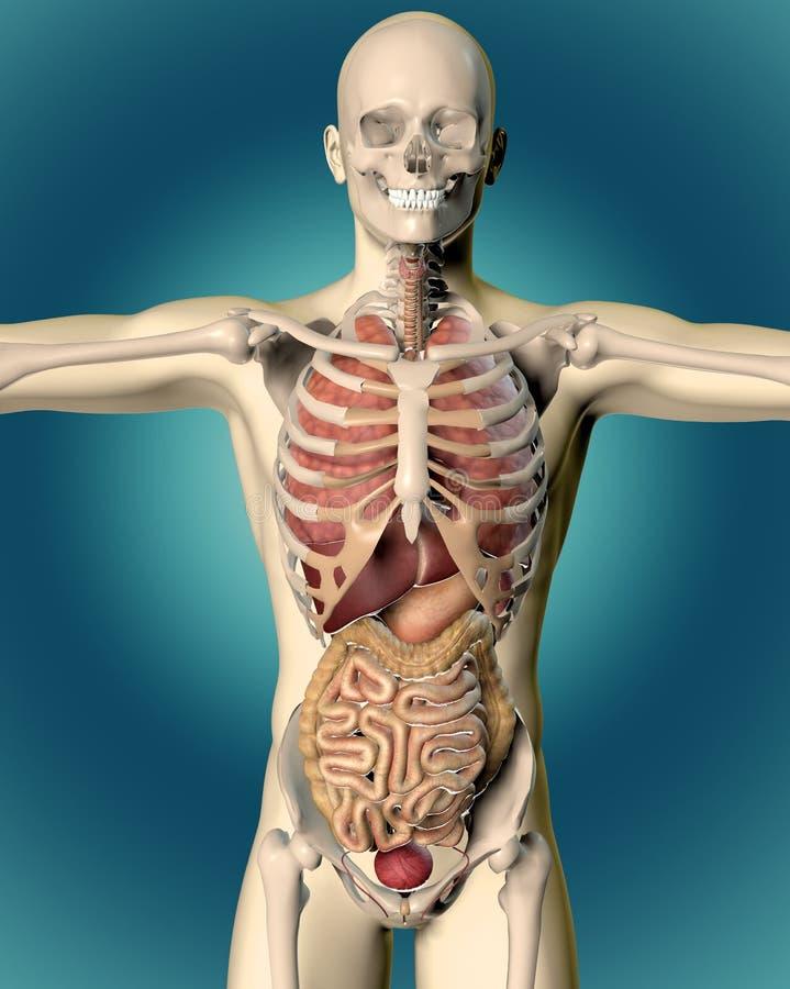 3D odpłacają się medyczny wizerunek męska postać ilustracji