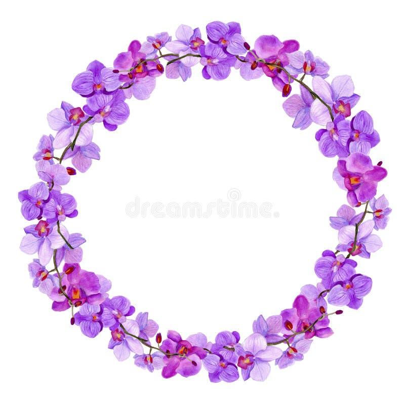 ` D'orchidée de ` de cadre d'aquarelle photo stock
