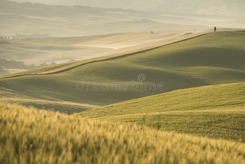 D'Orcia de VAl, Toscane image stock