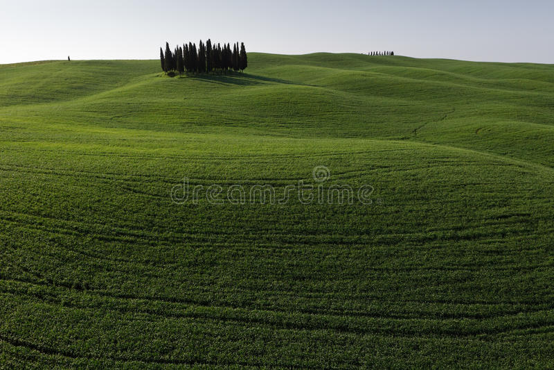 d'Orcia del San Quirico - Toscana - Italia immagini stock libere da diritti