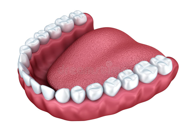 3d ouvrent le dentier illustration stock