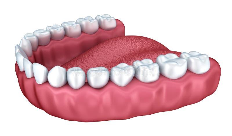 3d ouvrent le dentier d'isolement illustration libre de droits