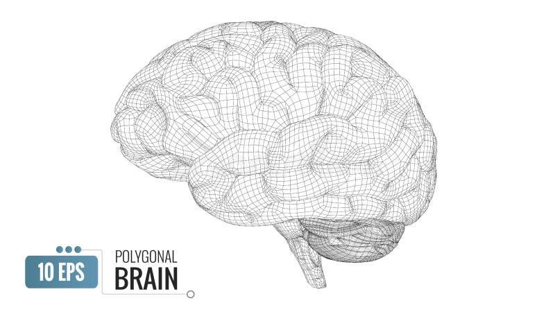 3D polygonal wireframe brain on white BG. Monochrome polygonal wireframe brain isolated on white background royalty free illustration