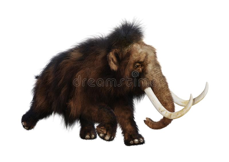 3D que rende o Mammoth felpudo no branco ilustração royalty free