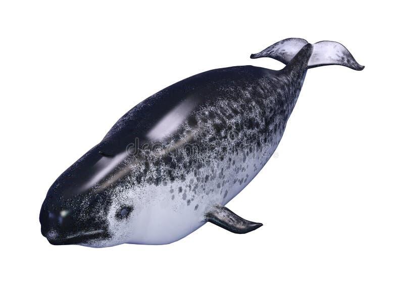 3D que rende o narval fêmea no branco ilustração do vetor