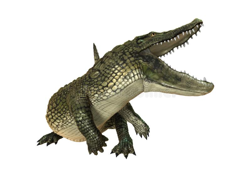 3D que rinde el cocodrilo americano en blanco libre illustration