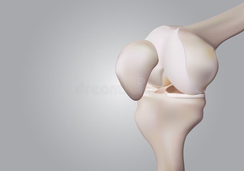 3D rappresentazione, illustrazioni di scienza umana e medica del ginocchio illustrazione di stock