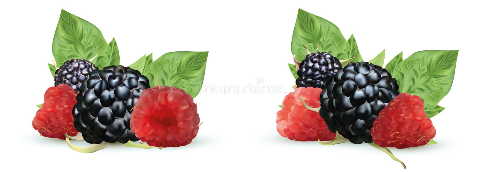 3D realistic Blackberry and raspberry isolated on white background. Set fresh, summer berry with green leaft. Black and. Red raspberry. Vector illustration royalty free illustration
