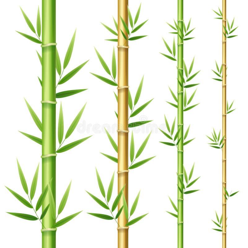 3d realistico ha dettagliato i germogli di bambù messi Vettore illustrazione vettoriale