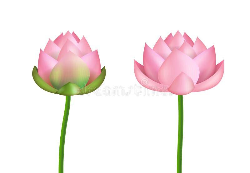 3d realistico ha dettagliato il rosa Lotus Flower Set Vettore illustrazione di stock