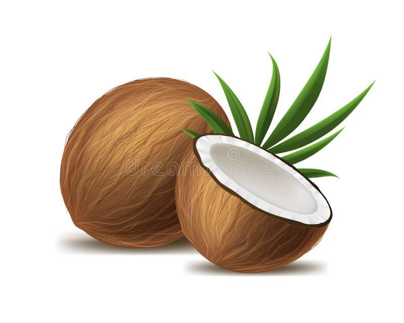 3d realistico ha dettagliato l'intera noce di cocco, la metà e la foglia verde Vettore illustrazione vettoriale
