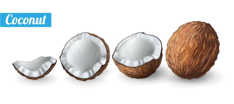 3D realistische geïsoleerde vectorreeks van gehele kokosnoot Kokosnoten vers geheel Vectorreeks elementen voor uw ontwerp Vector royalty-vrije illustratie