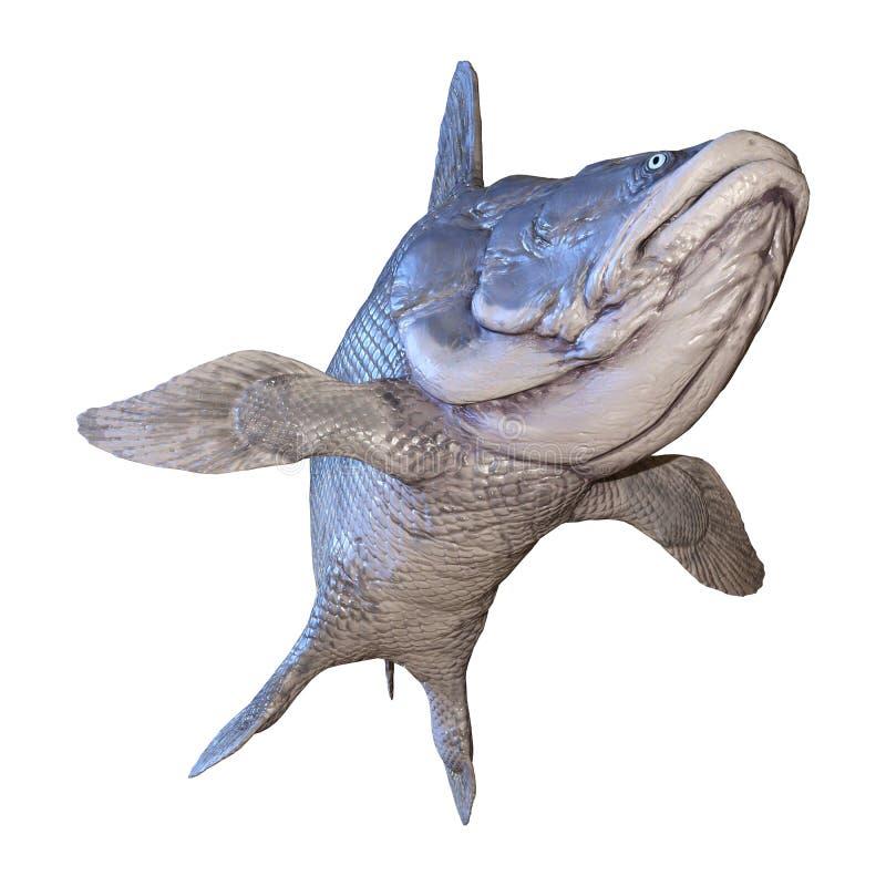3D rendant des poissons de Mawsonia sur le blanc illustration libre de droits