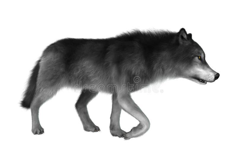3D rendant Gray Wolf sur le blanc illustration stock