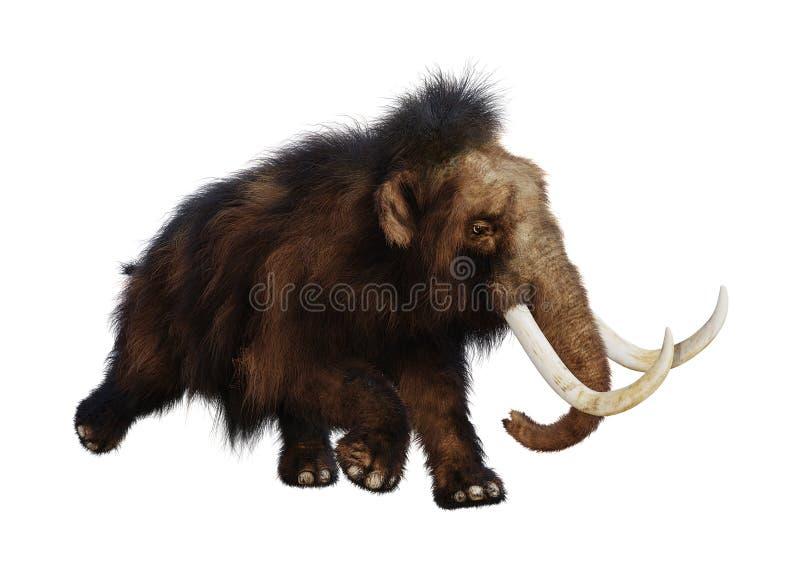 3D rendant le mammouth laineux sur le blanc illustration libre de droits