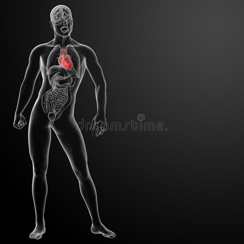 3d rendem a anatomia humana do coração ilustração stock