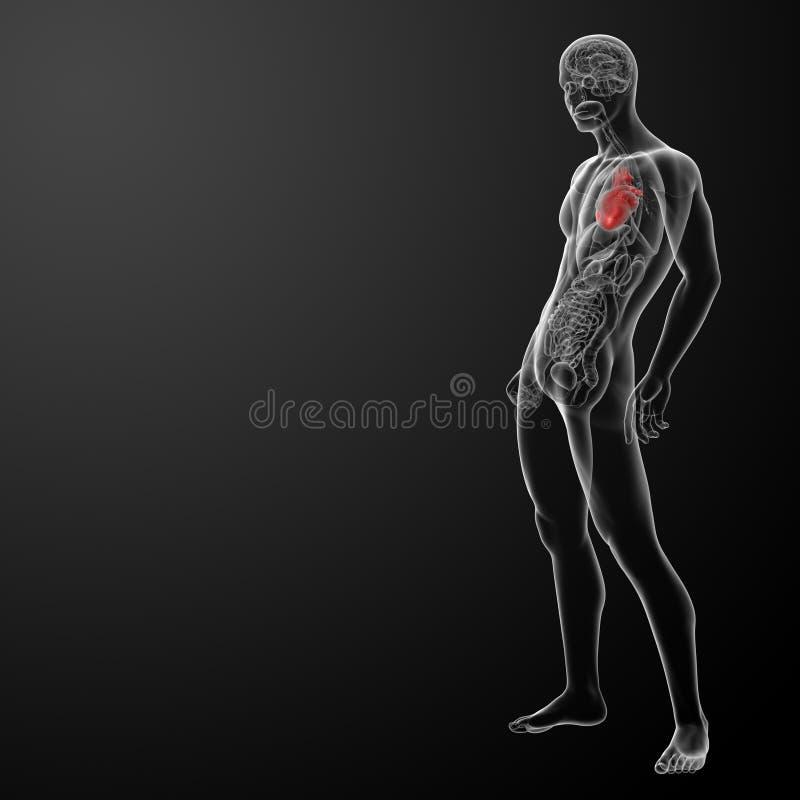 3d rendem a anatomia humana do coração ilustração do vetor