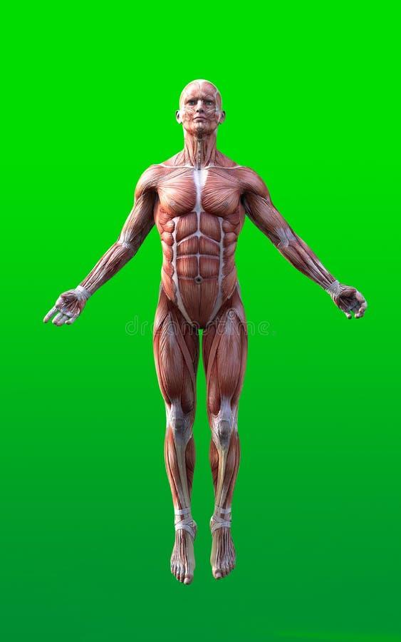 3D rendem das figuras masculinas pose ilustração stock