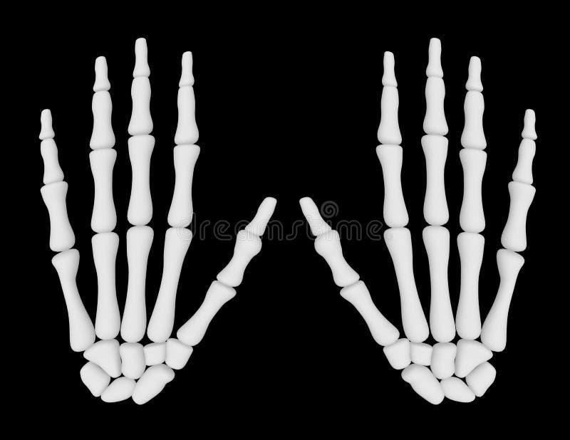 3d rendem de um par de mãos de esqueleto ilustração do vetor