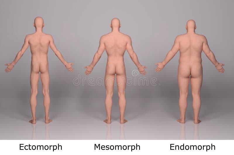 3D rendem: ilustração do tipo de corpo masculino ilustração royalty free