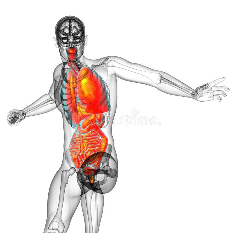 3d rendem a ilustração médica do sistema digestivo humano e ilustração do vetor