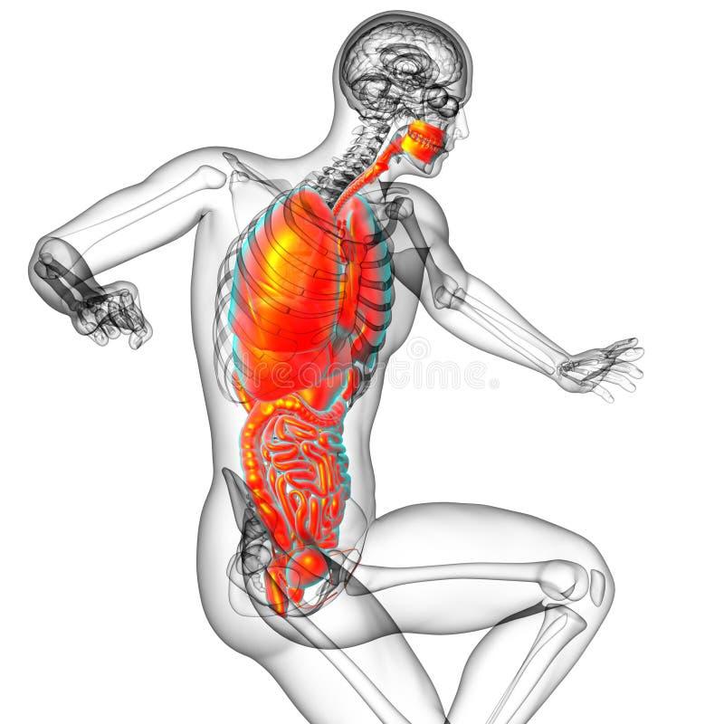 3d rendem a ilustração médica do sistema digestivo humano e ilustração royalty free