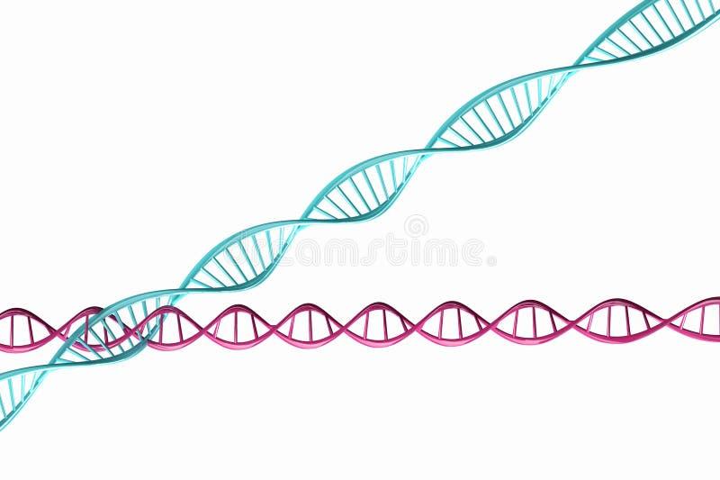 3d rendem, modelo da corrente torcida do ADN isolada. fotos de stock royalty free