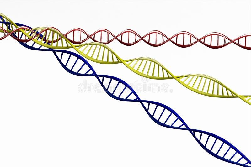 3d rendem, modelo da corrente torcida do ADN isolada imagem de stock royalty free