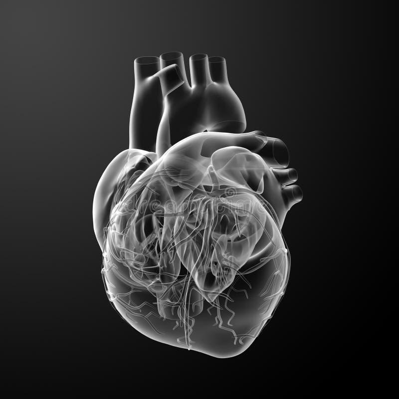 3d rendem o coração ilustração do vetor
