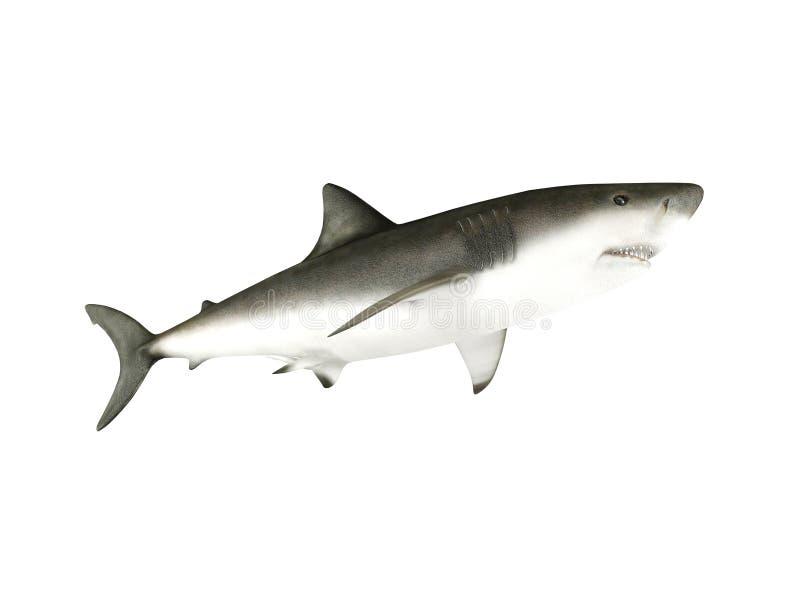 3D rendem o tubarão ilustração royalty free