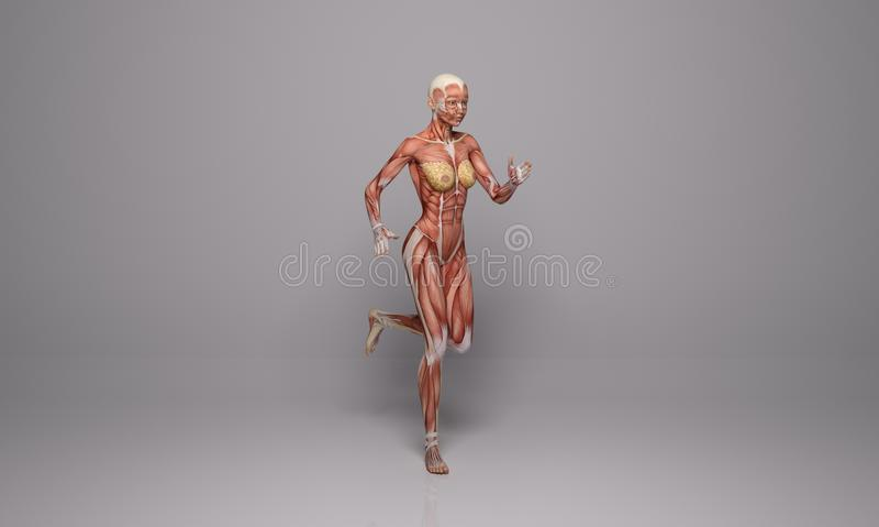 3D rendem: uma ilustração running do corpo fêmea com exposição dos tecidos do músculo ilustração stock