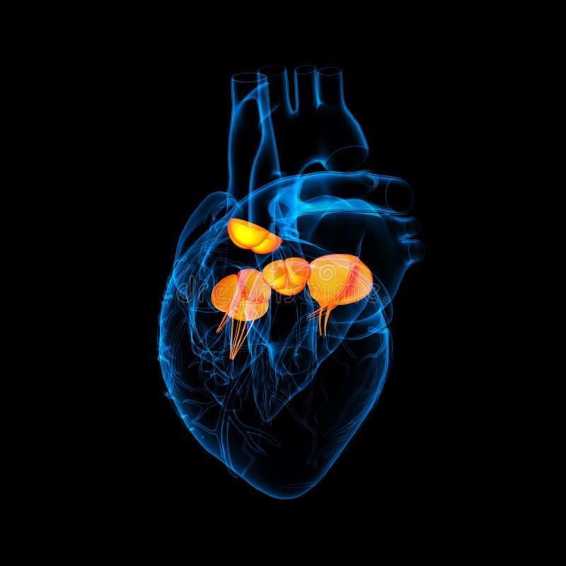 3d rendem a válvula de coração ilustração royalty free