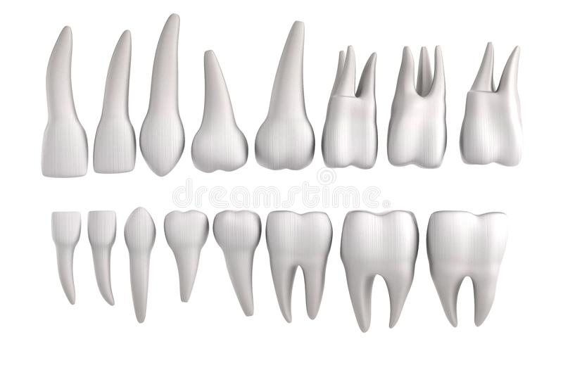 3d rendent des dents humaines illustration stock