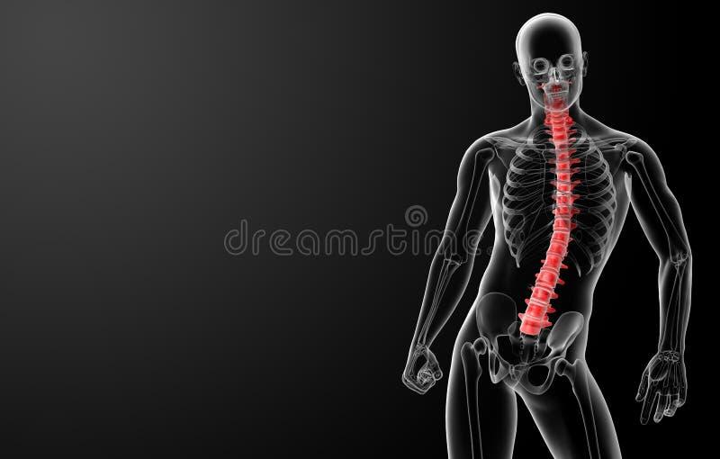 3d rendent l'anatomie humaine d'épine illustration libre de droits